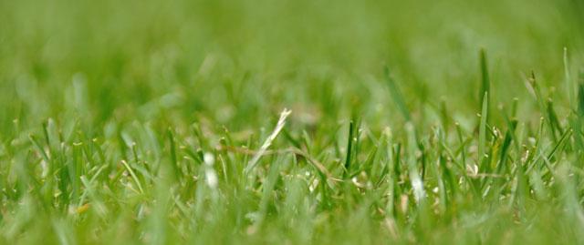 Plæneklippere til små græsplæner