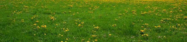 Typer af græs – Hvilken græsplæne skal jeg vælge?