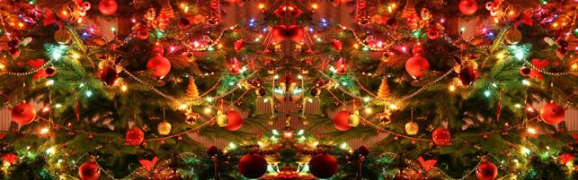 Årets juletræ – Skal det være et rødgran eller et normannsgran?