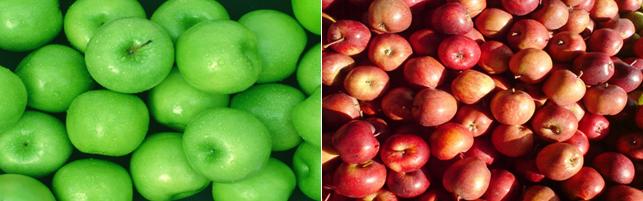 e-Bog: Opskrift på æblecider – Sådan laver du æblecider